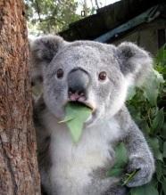 koala-meme-generator-jaw-drop-0fa4b_zps4eac4a8a.jpg